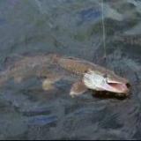 Рыбалка как хобби